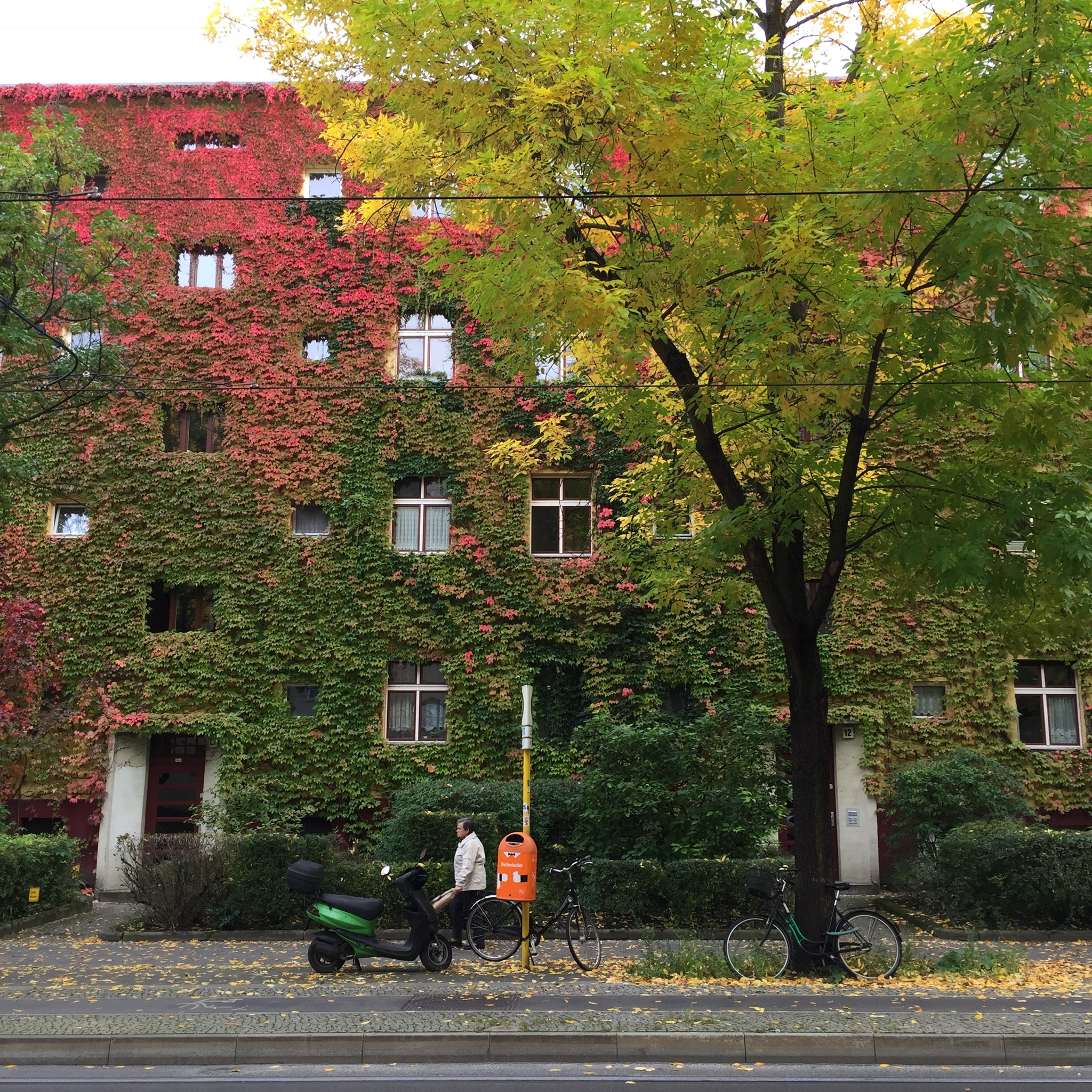 How about a dwelling covered by the trees and leaves… in Berlin?